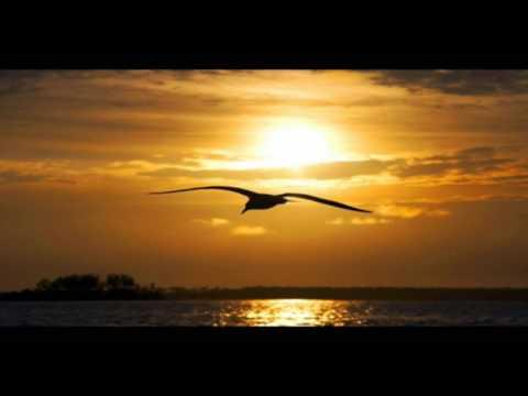ღ♫ Vinko Coce - Dalmacija, more, ja i ti ღ♫