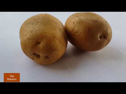Patatesten bedava elektrik üretmek (2017)