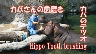 6月4日は「虫歯の日」で、毎年天王寺動物園のカバさんの歯磨き映像がテ...