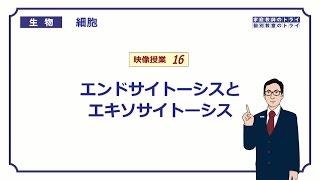 【高校生物】 細胞16 エンドサイトーシスとエキソサイトーシス(14分)