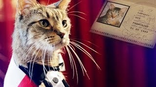 A French Cat Looks for Love in America