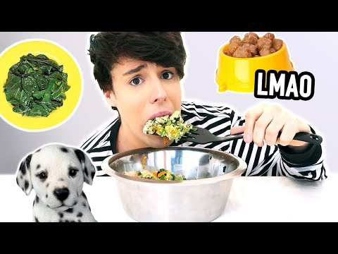i only made DOG FOOD recipes for a day !!! lmao