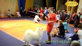 Выставка собак, Харьков, 30 октября 2016, видео 3
