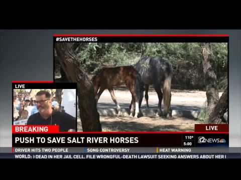 12 News Arizona Wild Horse Round Up