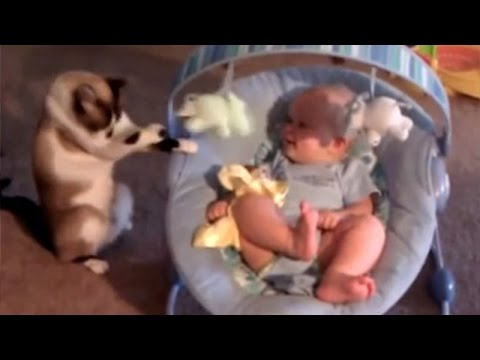Cats babysitting babies - Cute cat & baby compilation
