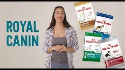 Royal Canin Dog Food - Discover More with Pet Circle