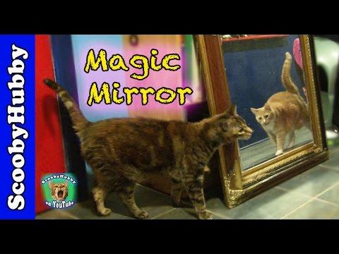 magic-mirror----cat-clips-#304