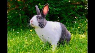 El conejo: cómo tener una mascota no convencional en la casa | Noticias Caracol
