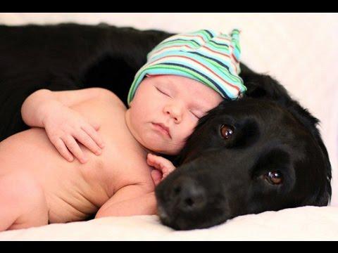 Собаки и кошки защищают детей! Удивительная сборка!