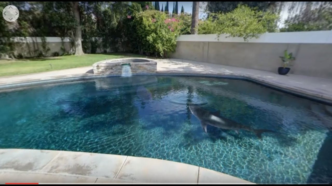 360 video of shark in open house swimming pool studio for Great swimming pools