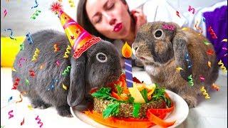 Первый День Рождения Кролик Лизун и Эльза едят торт | Elli Di Pets