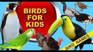 Download - Bird Animal Names and sounds for children Learn Animals