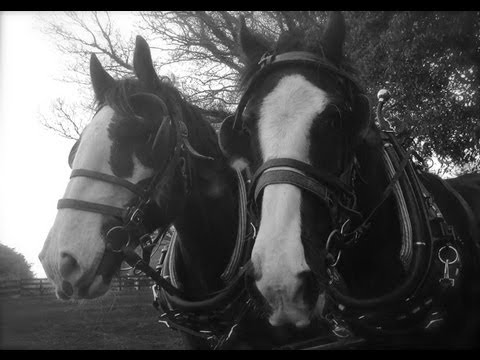 Breaking a pair of Shires