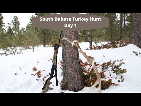 South Dakota Turkey Hunt Day 1 We found birds on the first day!!