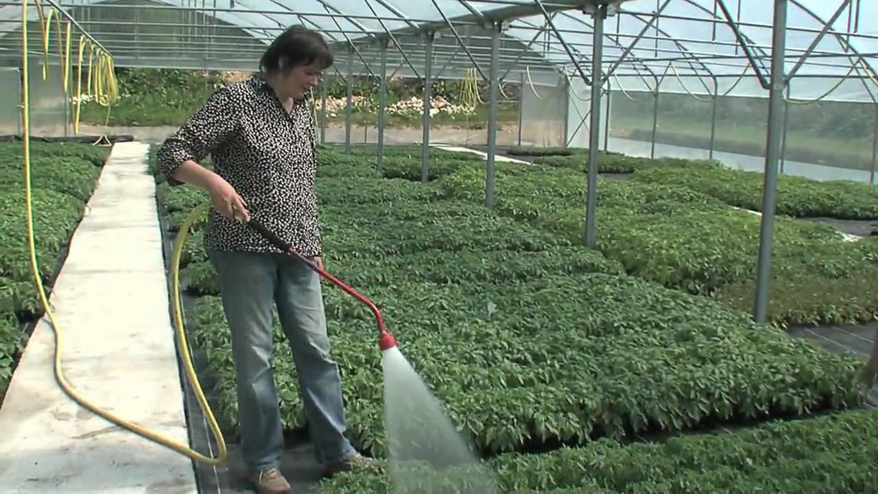 Bio plants du potager saint mards de fresne cultivez votre jardin bio youtube - Jardin potager bio saint denis ...