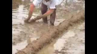 Viet Nam Made Co.,ltd - Seeder