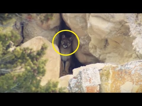 5 Strangest Things Found In Caves!