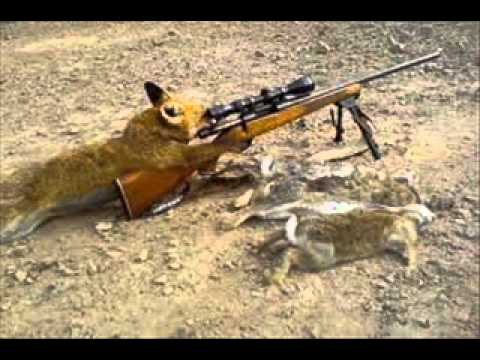 Animals with guns youtube - Pictures of funny animals with guns ...