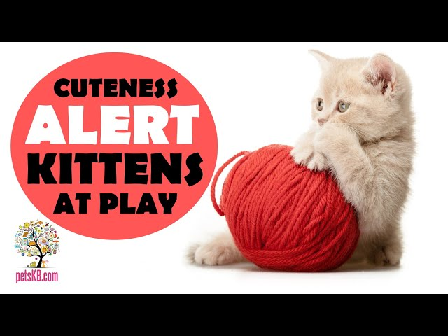 What do kittens like to play with? Cute kittens at play