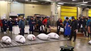 Tuna Auction at Tsukiji Market