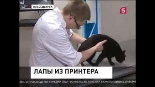 Уникальные 3D протезы лап у собак и кошек в клинике Бэст. Репортаж