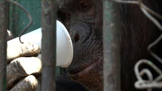 Egyptian zoo offers animals hot drinks during wintry weather
