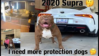 the-hulk-life-if-someone-tried-to-break-in-home-invasion-training-more-guard-dogs-now-2020-supra
