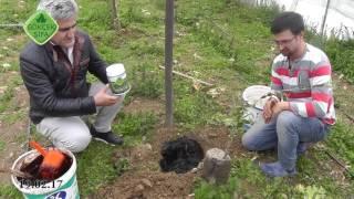 Zeytin Fidesi Ekinminde Hidrojel Gübresi, Hidrojel ile Verimi Meyve, Hidrojel ile Lezzetli Meyve