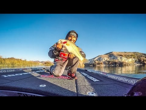 Uribe Sacks 16+ on Havasu