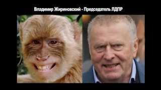 Юмор. Забавные сходства. Политики России. Прикольные фото. Смешное видео.