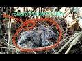 Suara Baby Pancingan Perkutut Lokal Sahda Di Pagi Hari Mikat Perkutut Ngalas(.mp3 .mp4) Mp3 - Mp4 Download