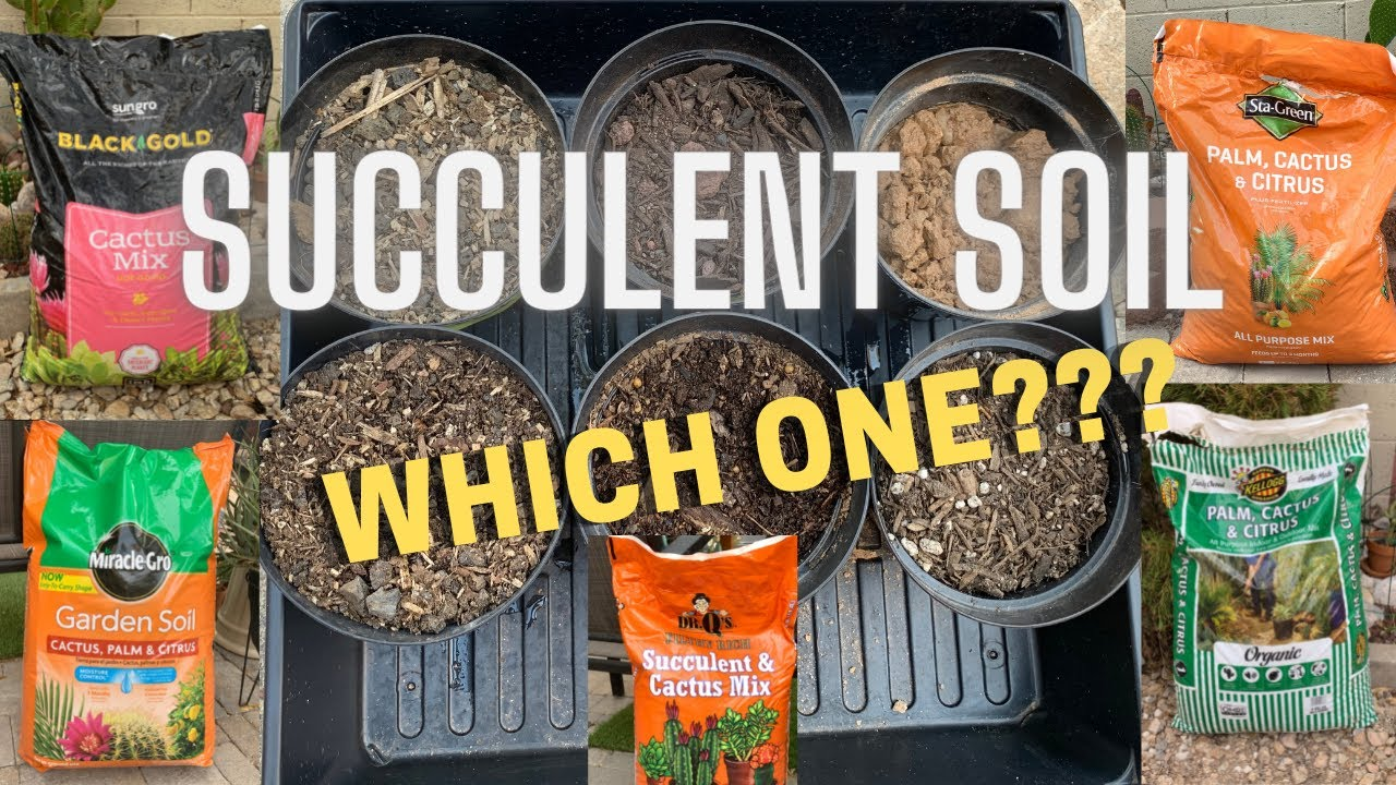 A Closer Look at Succulent Soil | Which Cactus and Succulent Soil is better?