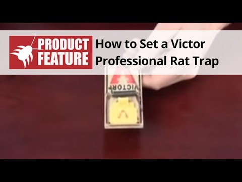 how to set a victor mouse trap youtube. Black Bedroom Furniture Sets. Home Design Ideas