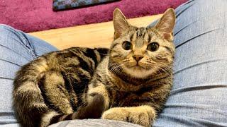 いつも上から目線の子猫が珍しく甘えにきてくれましたw
