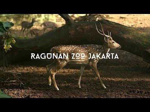 Ragunan Zoo Jakarta | VLOG