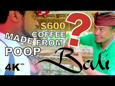 The World Most Expensive Luwak Coffee Plantation - Bali Indonesia Tanah Lot Travel Vlog
