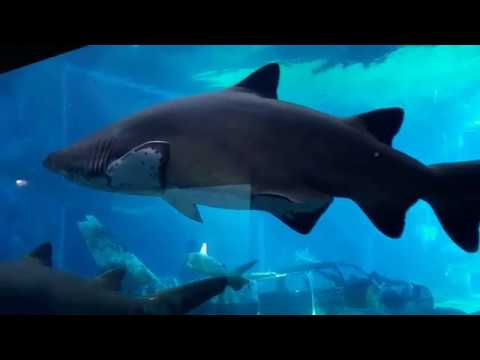 uShaka Marine Aquarium | uShaka Aquarium | Durban Aquarium