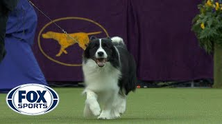 Flick the Border Collie wins the Herding Group | WESTMINSTER DOG SHOW (2018) | FOX SPORTS