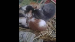 Котята только родились.
