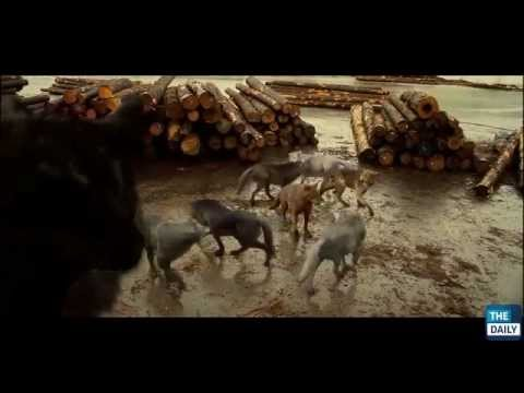 Behind the Scenes: Twilight's CG Wolf Pack