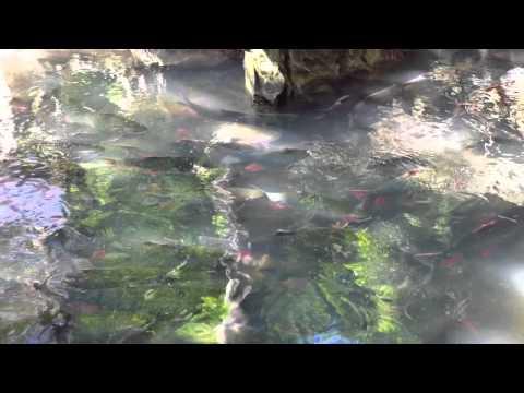 Suối Cá Thần Cẩm Thủy - Thanh Hóa