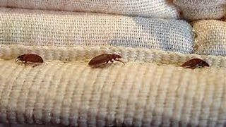 Bed Bug Mattress Covers Don