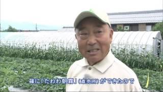 2016年6月放送 「京うり 木村さん(亀岡市)」 古くから京の都への食糧供...