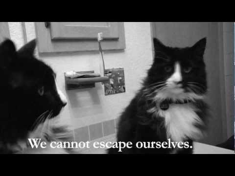 Existential Cat Shares His Thoughts