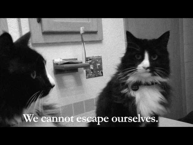 """""""Кот экзистенциалист"""""""