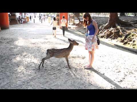 Bowing Deer in Nara - Japan