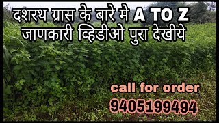 A TO Z ABOUT DASHRATH GRASS दशरथ गवताबद्दल संपूर्ण माहिती 9405199494