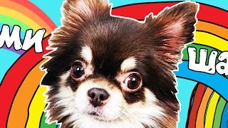 видео Щенок или собака не ест сухой корм? Питание щенка с Elli Di