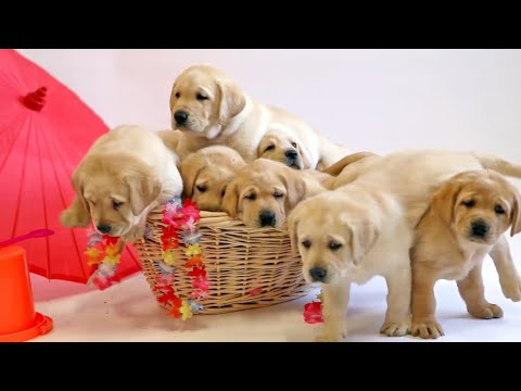 Download Puppies Paradise.