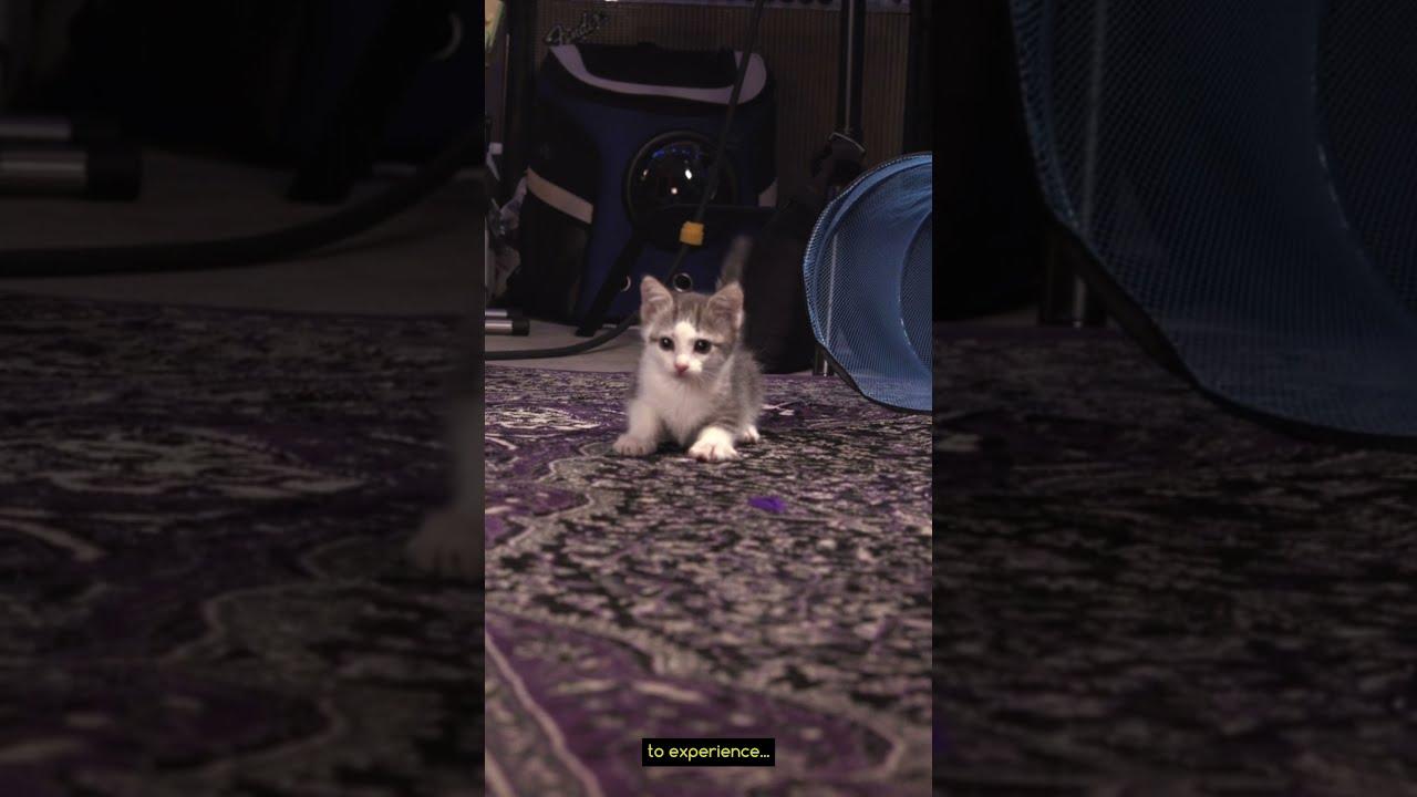 Playtime Turns Little Cat BIG! #shorts